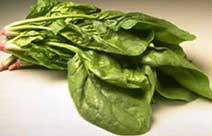 CDC_spinach1
