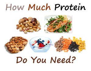how much protein