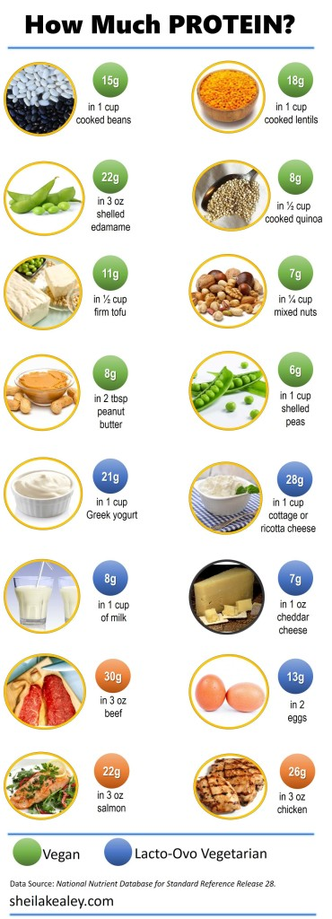 How Much Protein in Foods Infographic